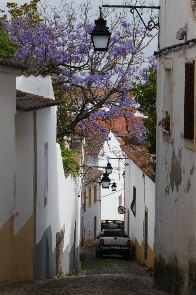 I loved this view down a narrow Évora laneway, showing the blossoming purple jacaranda spreading over the houses.
