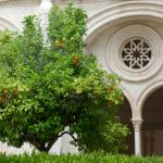 Detail of Alcobaça Monastery's cloister with orange tree. (Note the Gothic arches.)