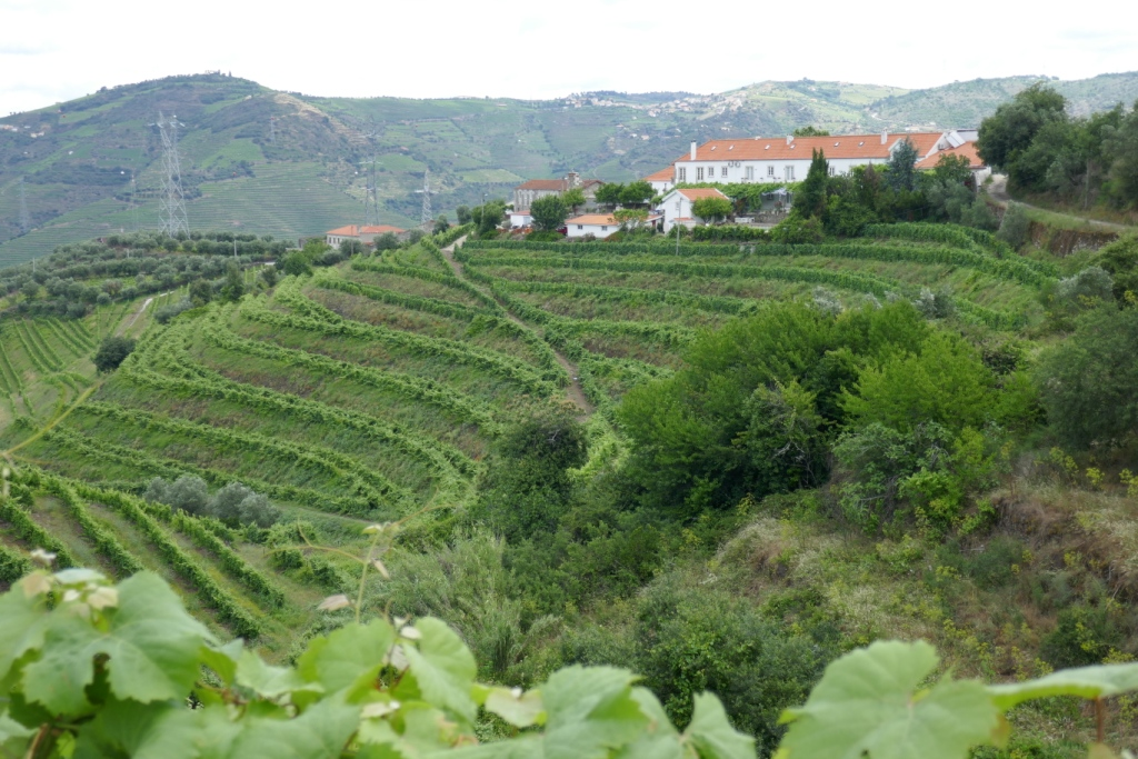 The terraced vineyard at Quinta (farm, estate) Santa Eufémia in the Douro Valley. Hundreds of years of work on the land has created these terraces, which make the Douro winemaking region a World Heritage Site.
