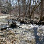 Stream Below Jackson's Falls, Prince Edward County, Ontario, Sparkling in Sunlight