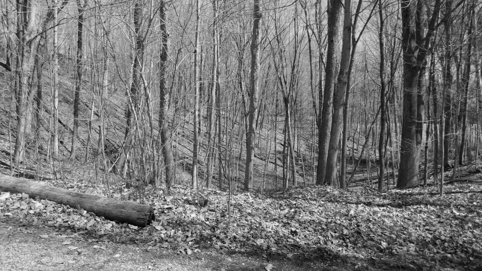 Early Spring in the Countryside Near Jackson's Falls, Prince Edward County, Ontario