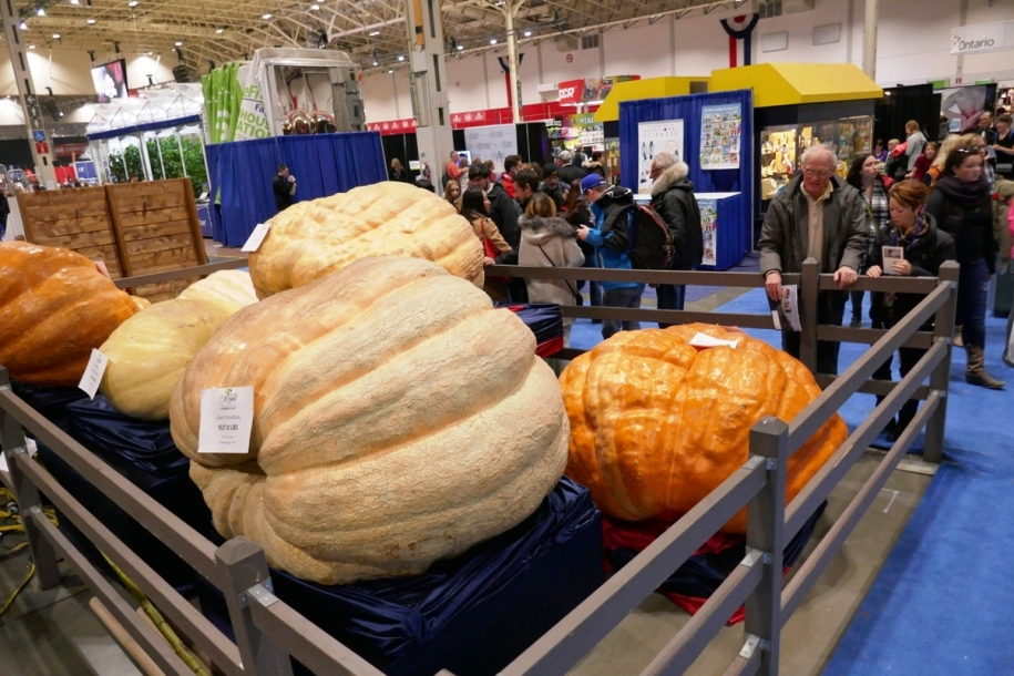 Giant vegetables at Royal Agricultural Winter Fair